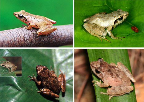 12种最濒临灭绝的珍稀动物