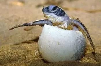 海洋里海龟最长寿?它们严重不服
