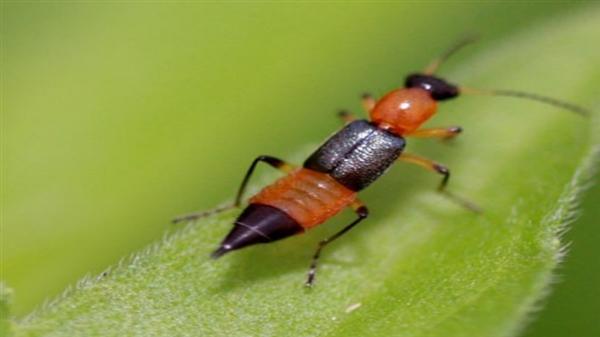 小心!夏天碰到这种虫子 千万不能拍死