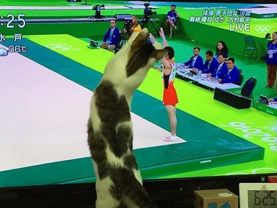 爱看奥运的不止人类 还有……