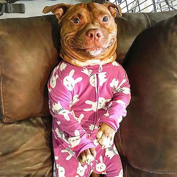 丑萌狗狗找到新家后欢笑不止 虏获网友芳心