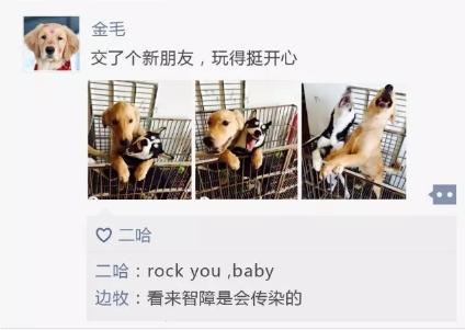 如果狗狗也有朋友圈:泰迪、二哈被黑哭