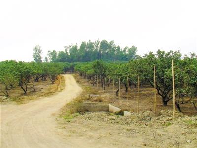 改造前的坪山新区补充耕地项目。