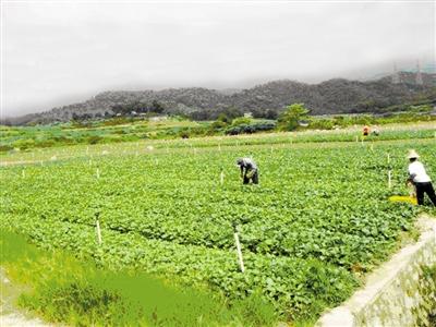 改造后的光明北土地开发整理补充耕地项目第一期。