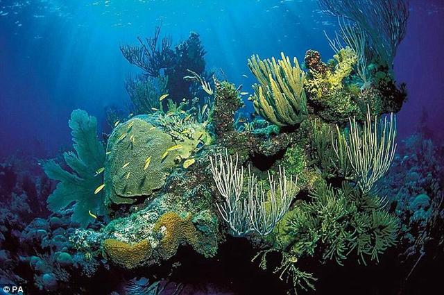 全球升温影响海洋 生态系统处于垂危状态