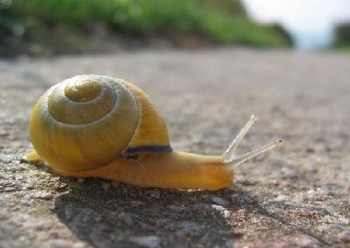 蜗牛(资料图片)