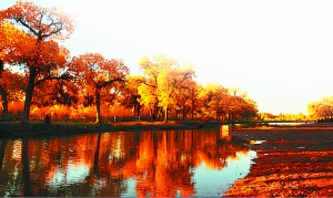 秋色记忆 意味悠长