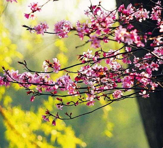 三月芳菲 寻找春天的色彩