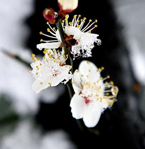 位于:浙江省杭州市西湖北面桃源领的杭州植物园内