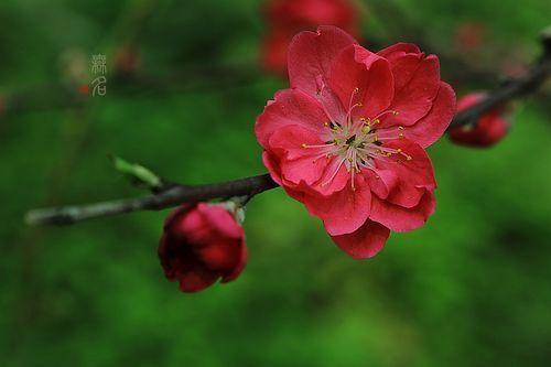 摄影必修课:春季花卉拍摄技巧分享