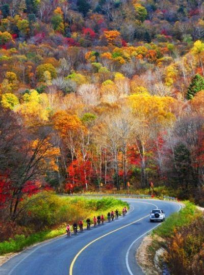 秋色如此之美!