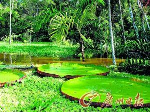 巴西热带雨林。