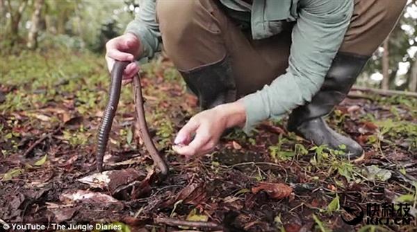 科学家丛林中发现巨大蚯蚓:体长堪比一条蛇