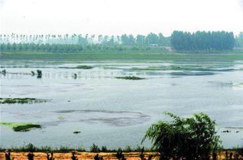 大沽河,平度,莱西,胶州